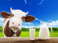 Got Milk ? Are you Lactose or Casein (or both) Sensitive  ?